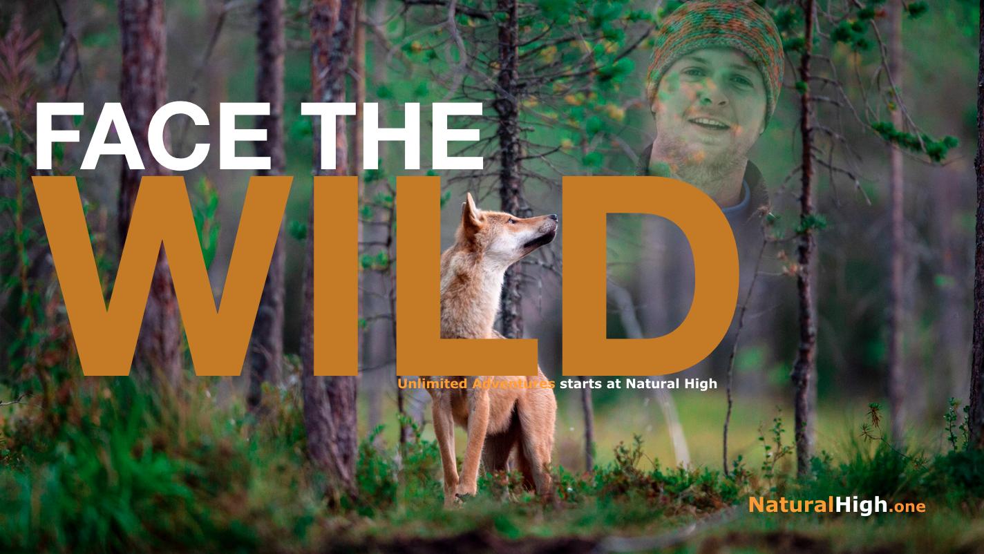 Brown Bears & Wolves Territory