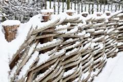 Close-up winterbeeld