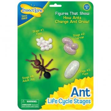 plastmodell av myrans livscykel