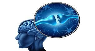 endocannabinoide system natures-health