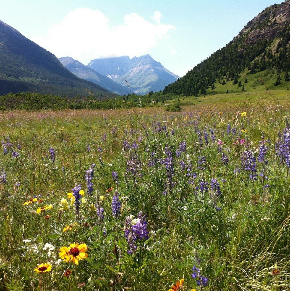 Hvad kan naturen gøre for vores sundhed_Natures-Health