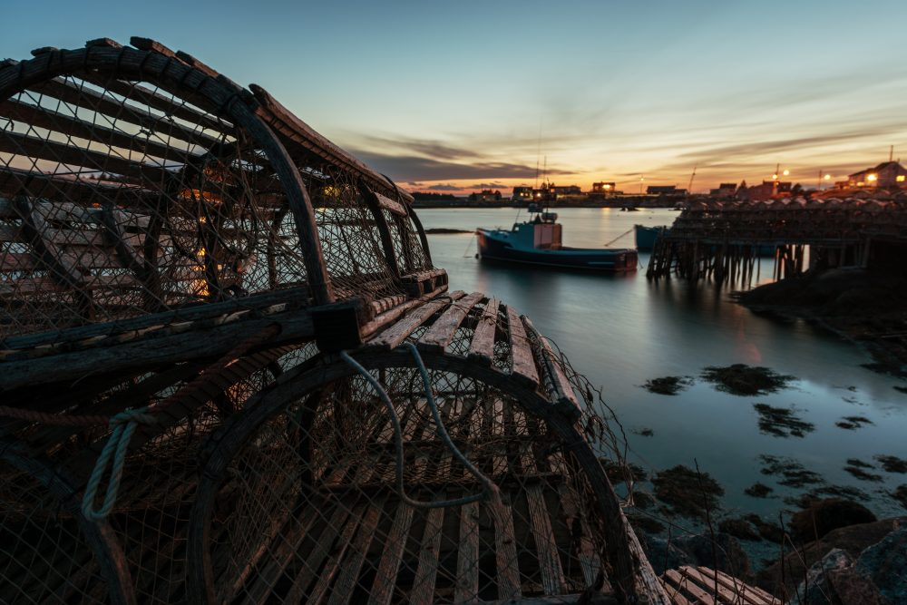 Det fiskes med en halv million hummerteiner i Norge hvert år