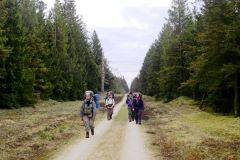 Jubitur-3.-En-af-de-lange-snorlige-skovveje-i-Gliudsted-Plantage