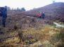 Silkeborgskovene i efterårsfarver