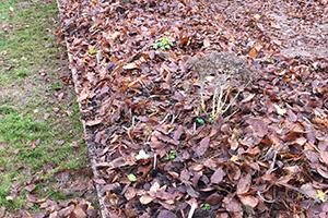 Kloge planter i hügelbed