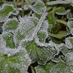 Lær at lægges haven i vinterhi