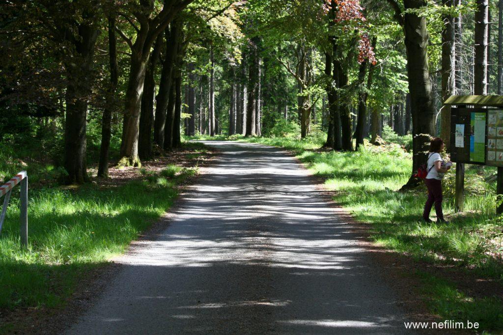 Heisterberg wandeling