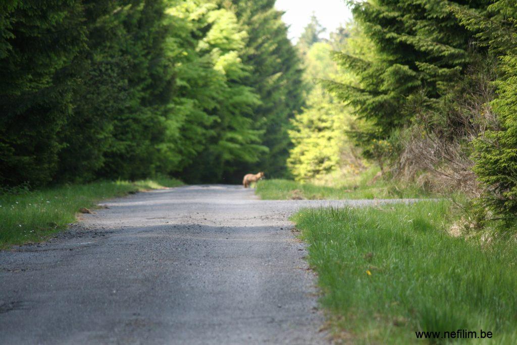 Heisterberg wandeling wolf