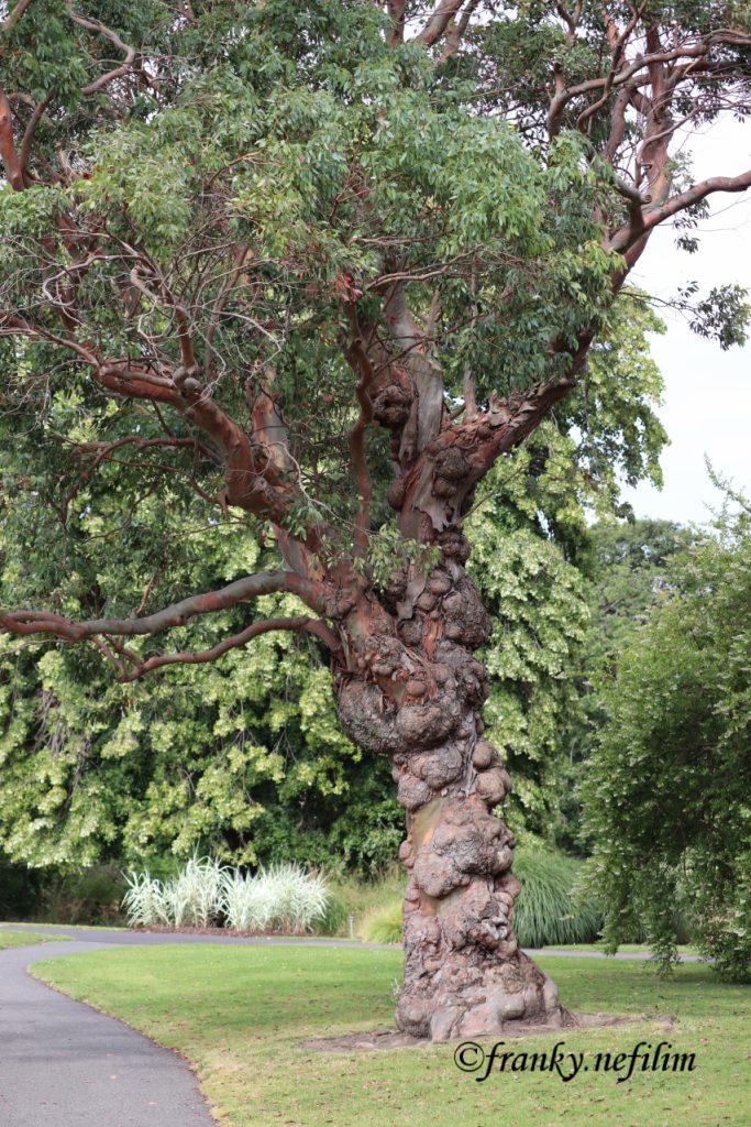 vreemde boom
