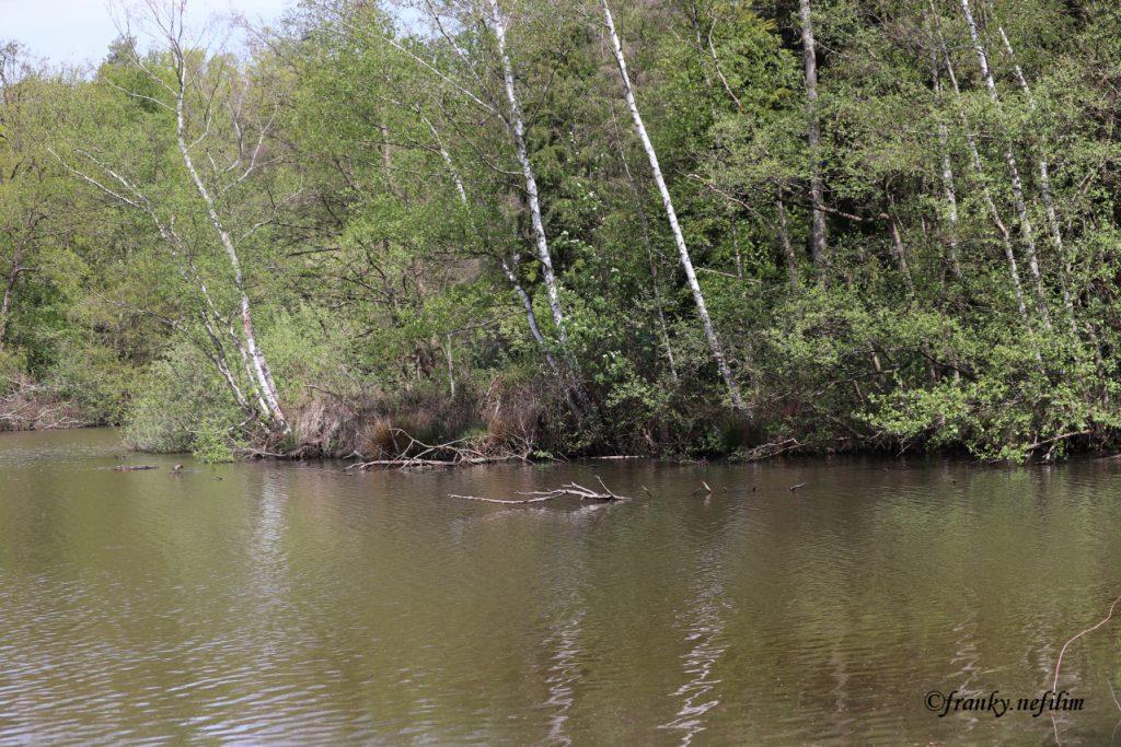 water en bos