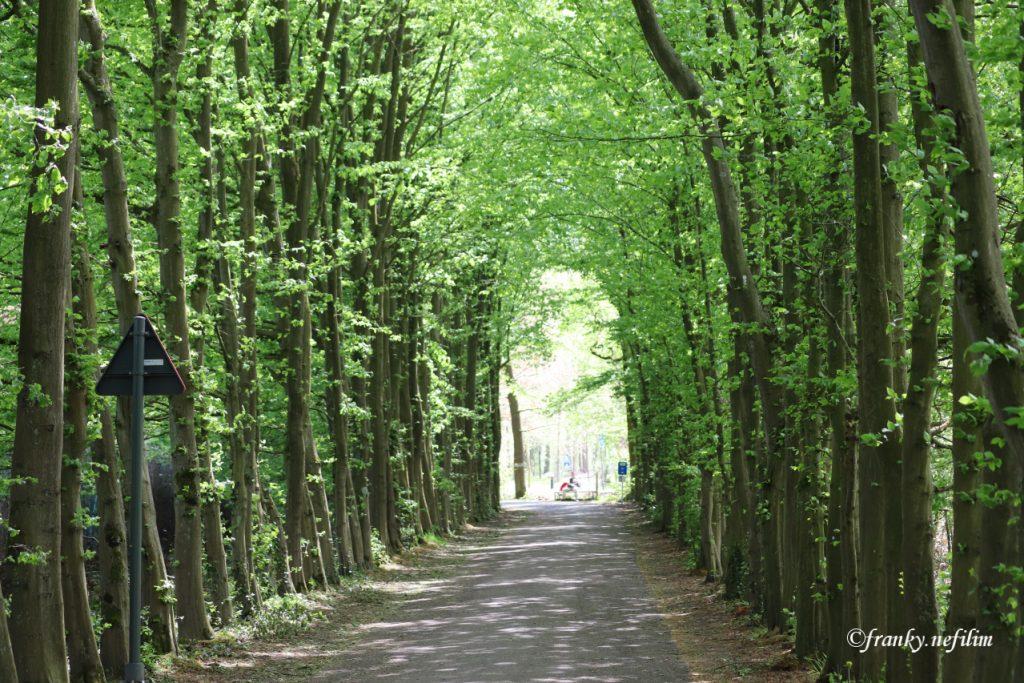 weg door tunnel van bomen