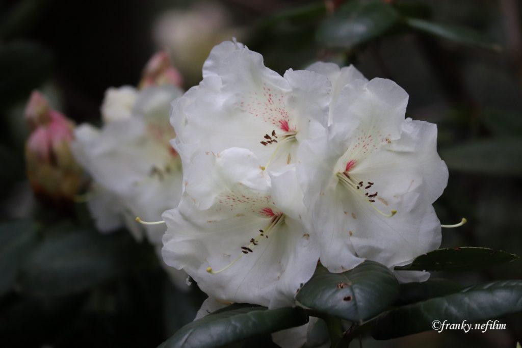 bloemen op de wandeling