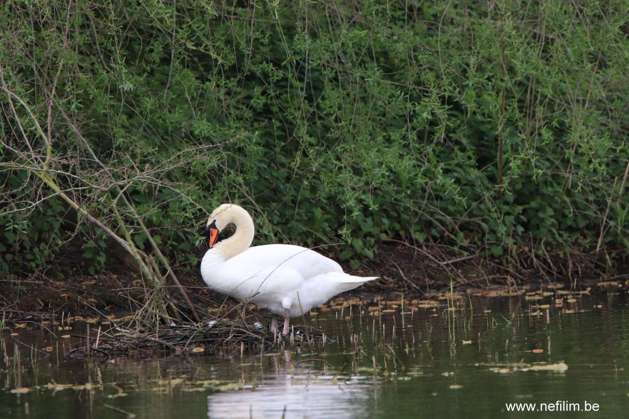 reserve_ornithologique-02
