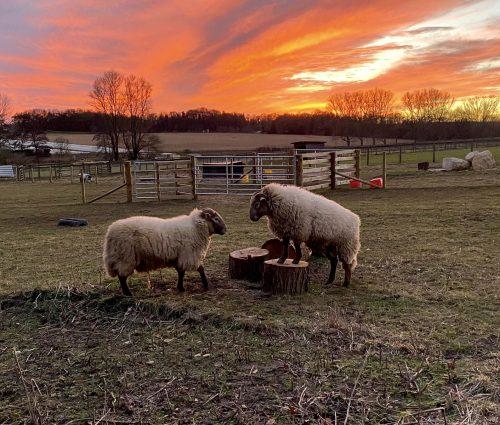 Nene Valley Spirits Sacrewell Farm
