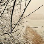 Vojens snee