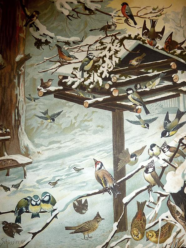 Schüssler Illustration via Antiquariat Hans Hammerstein