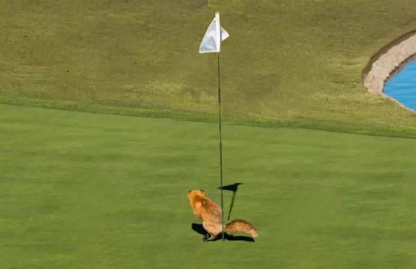 Das Originalfoto ist von Douglas Croft, Comedy Wildlife Photo Awards.