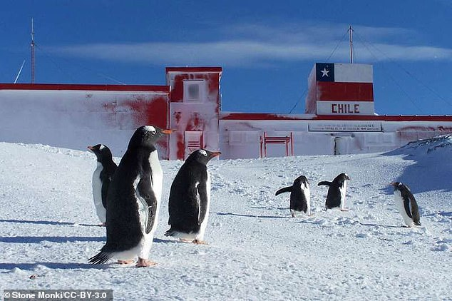 Researchers have found that antibiotic resistance has spread to penguins living in the Antarctic. Penguins living  near the O'Higgins Base (pictured) carried more resistant genes in their bodies than those living near the less-populated Gabriel González Videla Base (file photo)