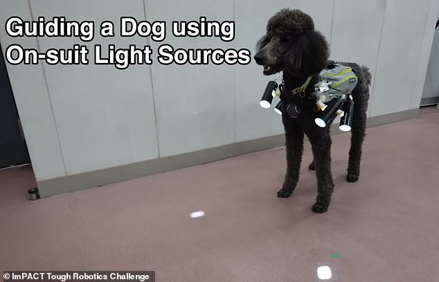 A video shared to YouTube shows exactly how the new system works; the dog (in this case a poodle) is fitted with a vest that has ¿on-suit light sources,¿ which shine on the ground in the direction it should go