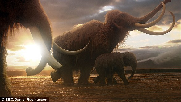 Woolly mammoths were a victim of warming climate, shrinking habitat and increased hunting from a growing early-human population which drove them to extinction - along with many large animals