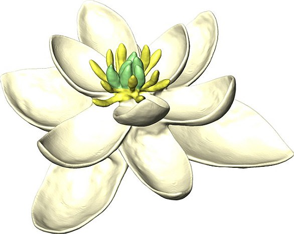 It looks like a magnolia and would not be out of place in any front garden. But this flower is the mother (and father) of every flowering plant living today and was gazed upon by the dinosaurs 140 million years ago