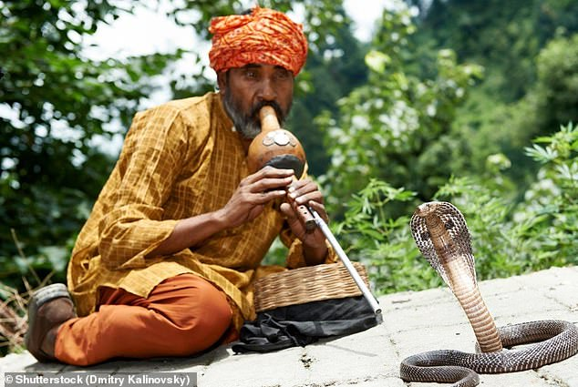 Premature babies who are played music ¿ particularly that of the Indian snake charmer's flute, the punji (pictured) ¿ were found to have brain development more similar to a full-term baby's than other premature infants who didn't listen to music (stock image)