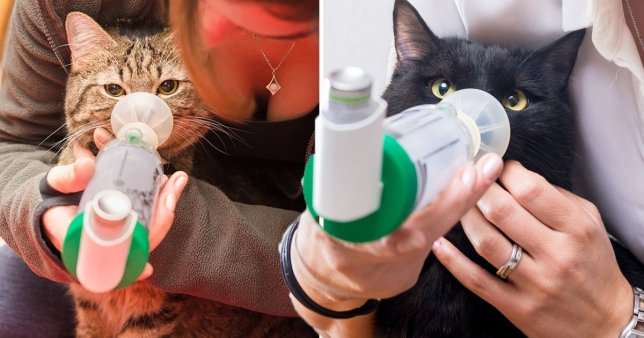 Leeno and Poncha using their inhalers