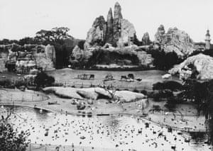 Without bars … Carl Hagenbeck's Hamburg 'panorama zoo', c 1920.