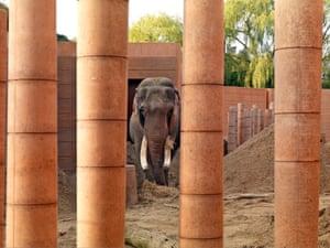 Overblown … Norman Foster's elephant enclosure in Copenhagen zoo.