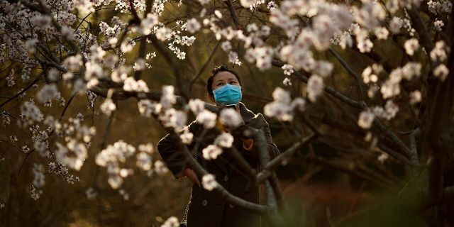 A woman wearing a protective mask looks at blossoms in a park on a sunny day in Beijing as the country is hit by an outbreak of the novel coronavirus disease (COVID-19), China, March 21, 2020. (REUTERS/Thomas Peter)