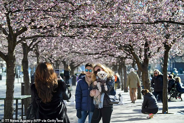 People pose for pictures among blooming cherry trees in Kungstradgarden park in Stockholm on March 22, by which time many European countries were already in lockdown