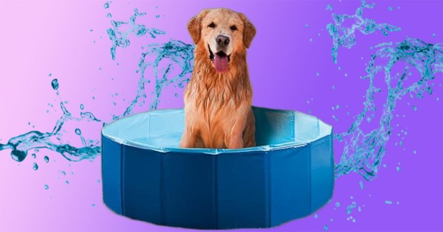 The B&M pet paddling pool on a colourful background