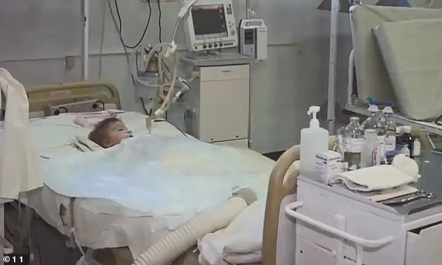 Yegor, two, in hospital where he died after an agonising 10-day fight for his life following an attack by dogs who ripped off his genitals