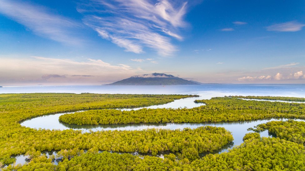A landscape shot of a mangrove forest with a winding river passing through it with a volcano in the distance