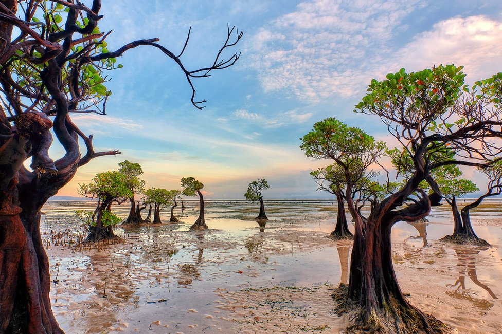 A landscape shot of mangrove trees at jaunty angles looking as though they are dancing