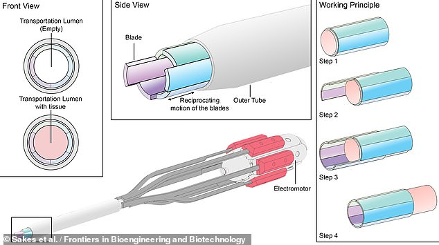 The ovipositor's blades can slide independently of each other, moving eggs down through the ovipositor by friction — or, in the case of the surgical device, tissues up the tool, as pictured