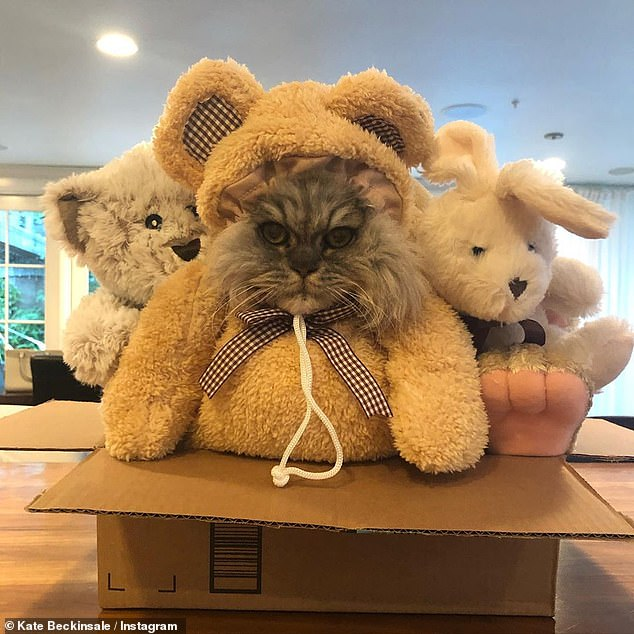 Quarantine partners: When she is not jet setting around the globe, Kate is busy quarantining at her lavish Los Angeles home with beau Goody Grace, 23, her Pomeranian, and her two cats