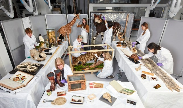 The conservation team working on exhibits for the London attraction's upcoming exhibition, Fantastic Beasts: The Wonder of Nature