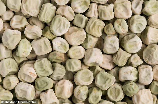 This image shows wrinkled peas which are full ofresistant starch, which canhave a positive impact on controlling blood glucose levels and reduces susceptibility to type 2 diabetes