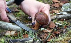 A woman picks funghi near Dobieszczyn in Poland