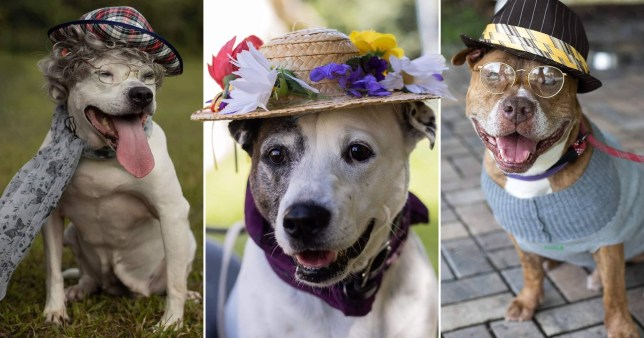 Dogs are dressed up as old people to help get them adopted.