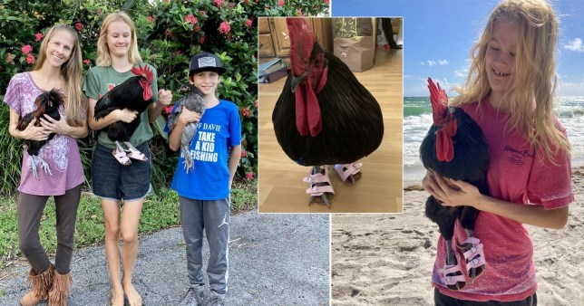children buy pet cockerel his own shoes when left with their mum's credit card