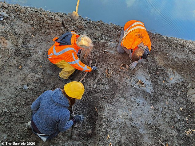 The team expected to find artifacts like buttons or jewelry, but only spotted old nails among the remains – pointing to the idea that this may have been a mass murder