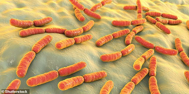 The composition of the microbiome may be substantially affected by cesarean section delivery, researchers say. Pictured, illustration of probiotic bacteria. Probiotic means a microorganisms with beneficial properties. Bacteria is a type of microorganism, as areprotozoa and fungi