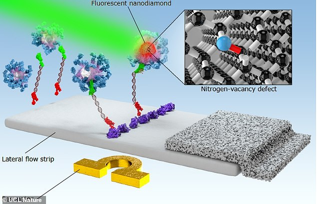 Pictured, a graphic showing how the lateral flow assays with nanodiamonds work. They are fixed in a paper strip and designed to bind to markers of disease. If they do, they fluoresce and this indicates a positive test result
