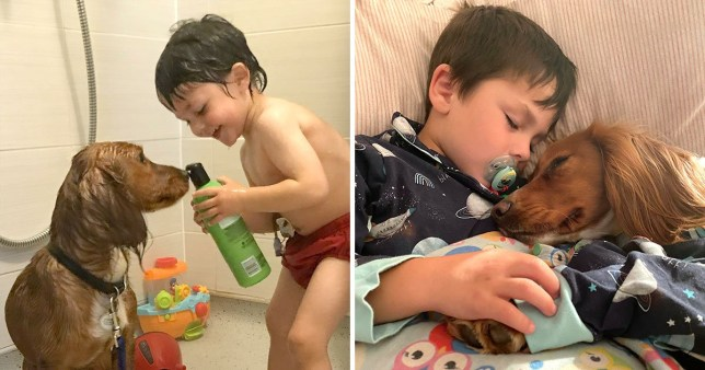 Autistic boy and dog share special bond Caters