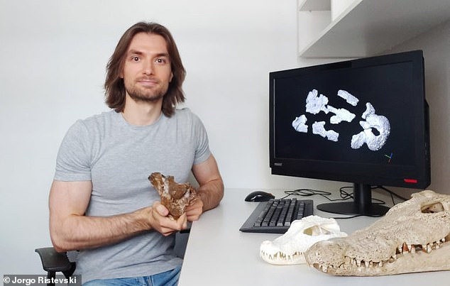 University of Queensland researcher Jorgo Ristevski with the skull ofPaludirex vincenti, an extinct crocodile that resembled its modern-day descendants 'on steroids.' The 'swamp king' preyed on giant kanagroos and wombat-like marsupials in southern Queensland between 5.3 and 2.8 million years ago