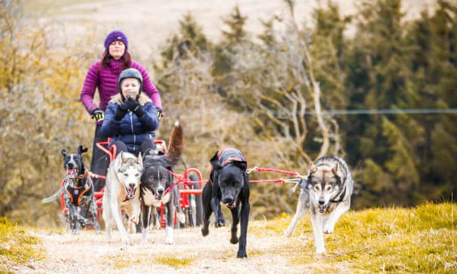 Adventure holidays such as dog-sledding are proving popular.