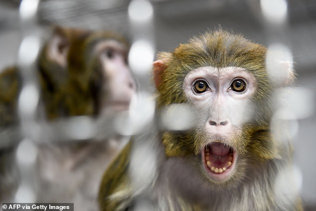 Sticking to a losing proposition, known as the 'sunk cost' phenomenon, is evident in other primates besides humans and has been demonstrated in pigeons and rats, too. Researchers say that suggests there's an evolutionary mechanism at play, not just pride or embarrassment
