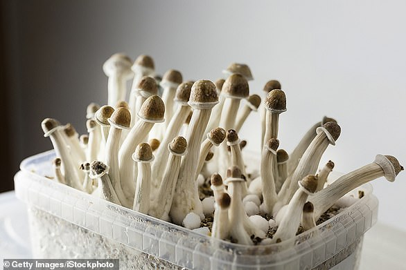 A study by Johns Hopkins Medicine found that half of depression patients who took two doses of psilocybin, the compound found in magic mushrooms (above), were considered to be in remission